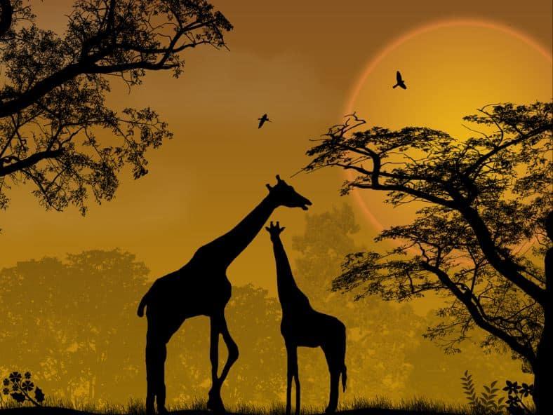 Africa Language Professionals Dream Continent